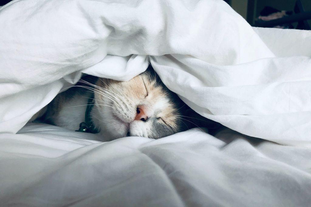 por que estamos dormindo menos