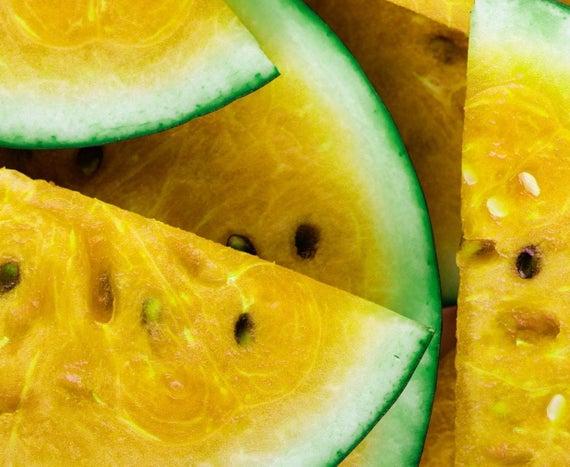 extração sustentável melão do kalahari